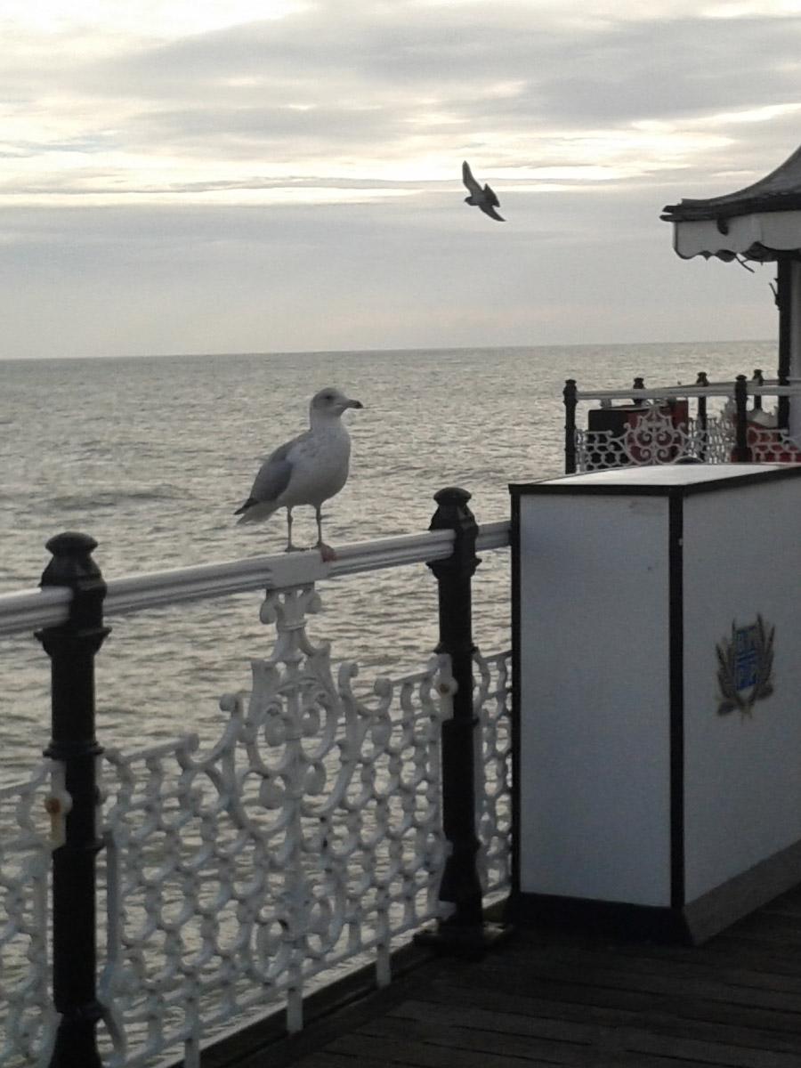 Gulls on Brighton Pier